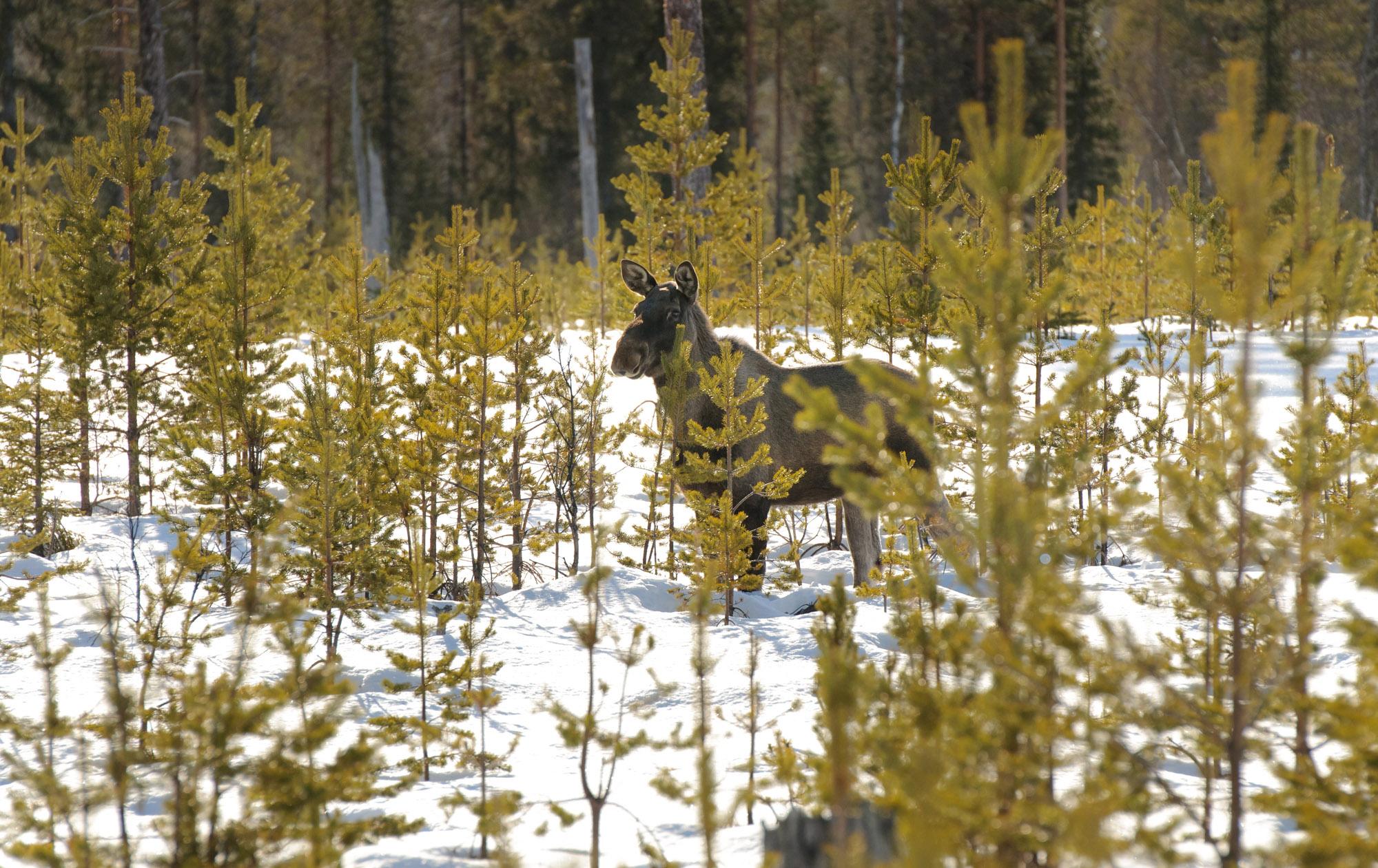 Svansele Wilderness Centre - 2011-03-20_006